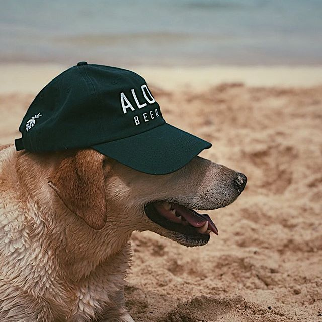 Trucker hats, Dad hats, Dog hats--We got em all.