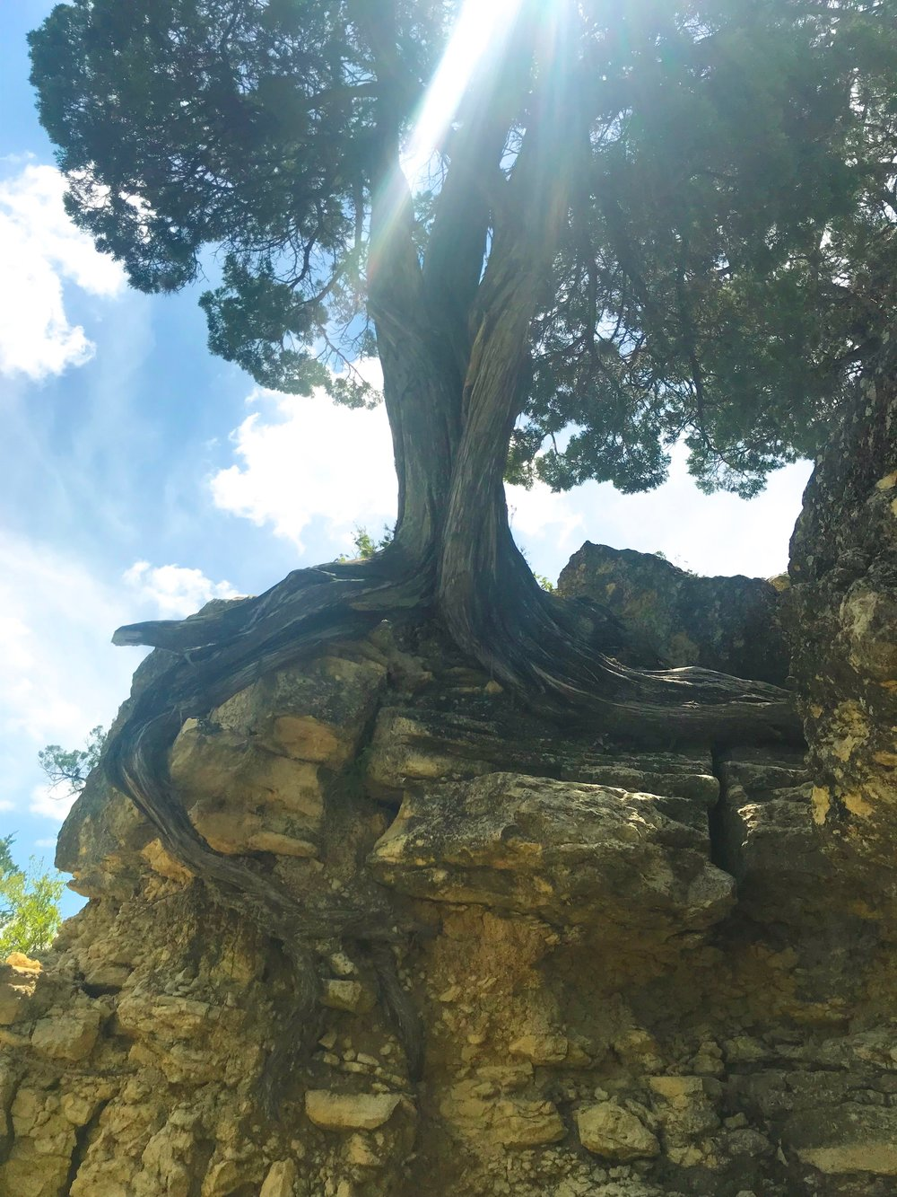 Garner Tree in the Rock.jpeg
