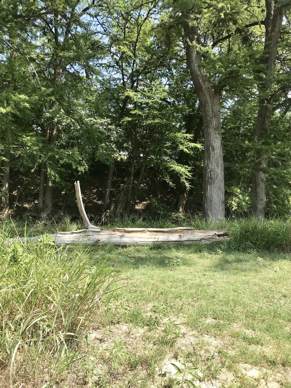 Campsite 3.jpg