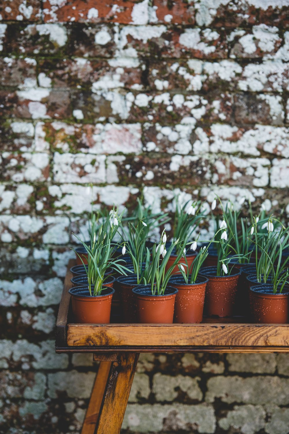 absolutely everything you need to know about starting an herb
