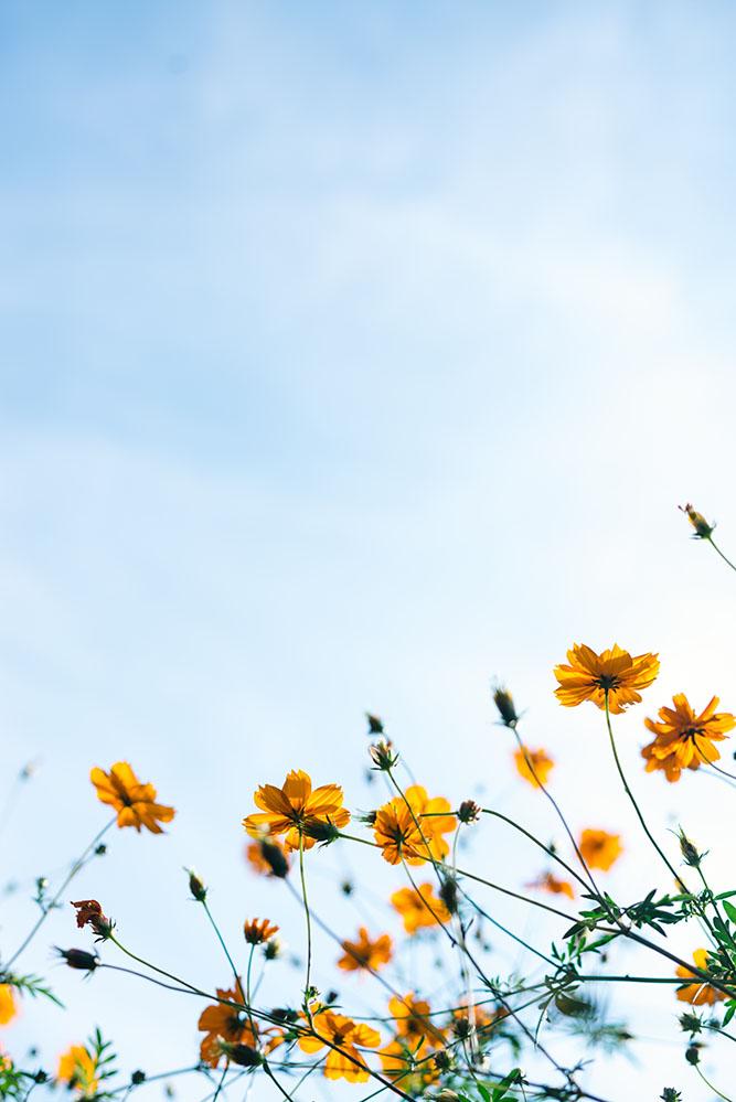 Spring fling. -