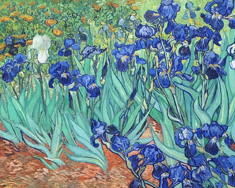 'Iris' by the artist Van Gogh, 1889
