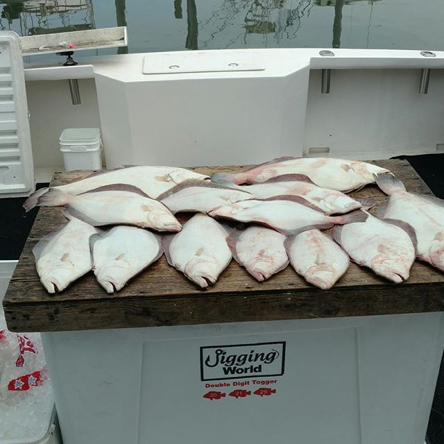 Good catch of fluke today. 3 biggest were 7.5, 8, and 8.5lbs.