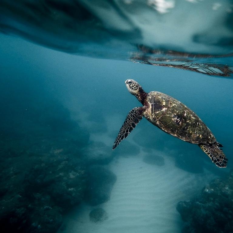 STOP Ocean plastics -