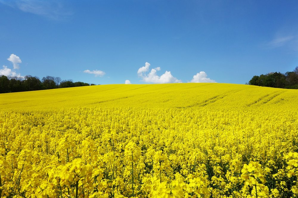 working with nature - Sustainable oils such as Swedish rapeseed oil are used in the production process ……this Bio-based technology means that the steel is 100% recyclable, has a low energy impact… and looks great