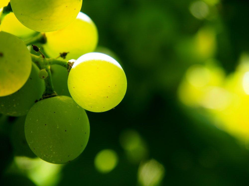 grapes few.jpg