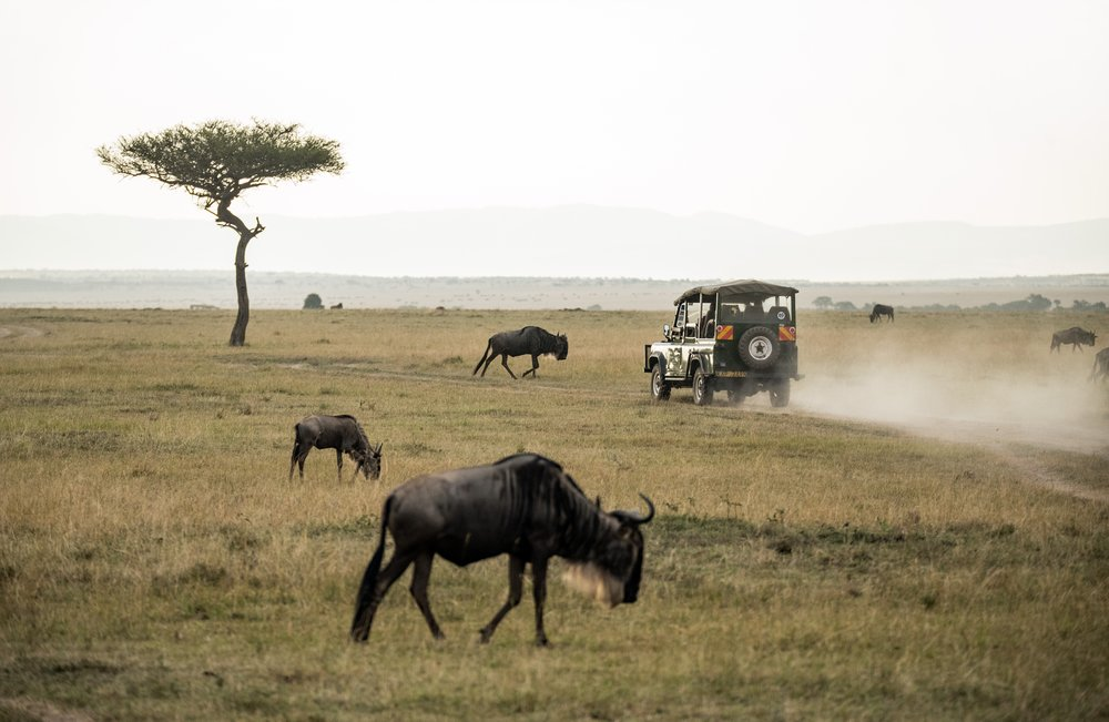How to go on an Ethical African Safari