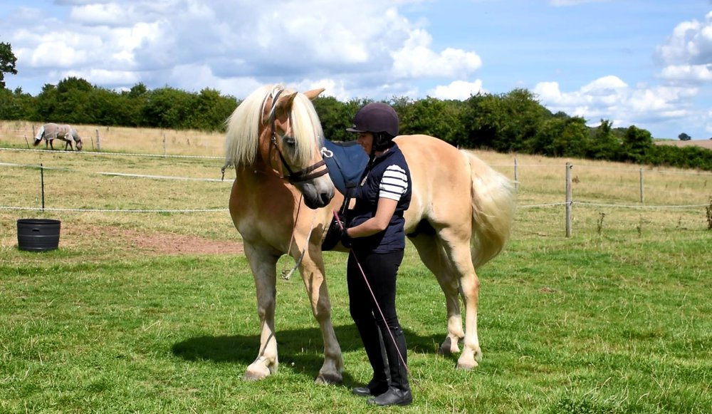 "With a French Classical basis, our training is often mistaken for ""Natural Horsemanship"" - it is however, just being a good horseman!"
