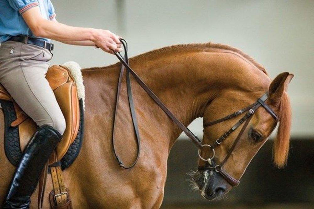 hyperflexion-in-horses.jpg
