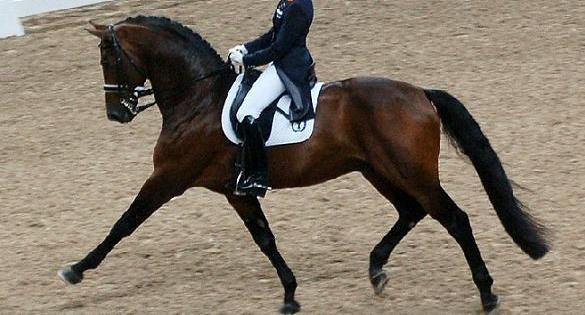 Ann-Romneys-Olympic-bound-horse-puts-political-comedic-spotlight-on-dressage.jpg