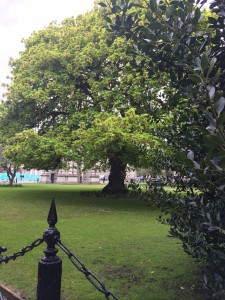 Trinity College Tree