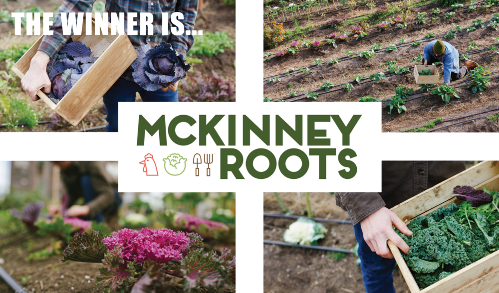 McKinney-Roots-web-image.png