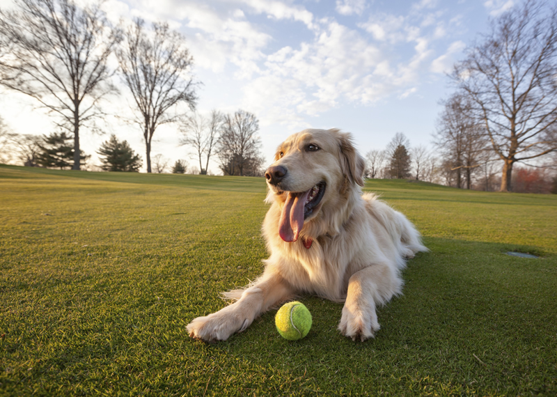 7 Etiquette Rules to Follow When in the Dog Park