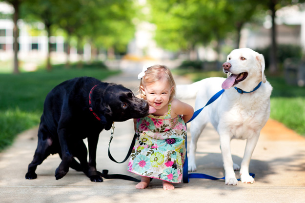 Its_a_Lab_Thing_Labradors_Kids001.jpg