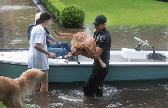 Hurricane-Harvey-dogs-pets-animals-1049557.jpg