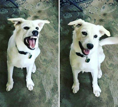 canine-help-you.jpg