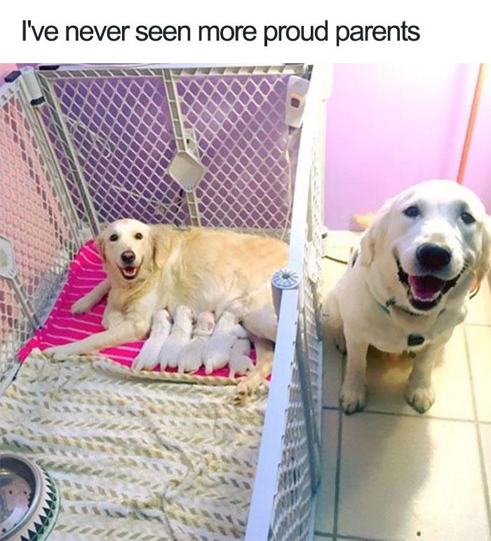 cute-wholesome-dog-puppie-memes-47-5907184b167f7__700.jpg