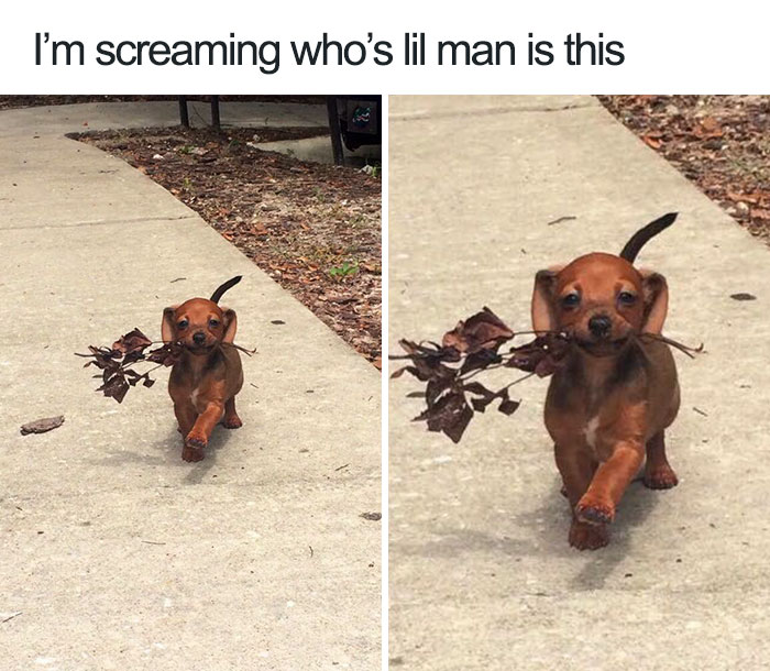 cute-wholesome-dog-puppy-memes-247-59082989944d9__700.jpg