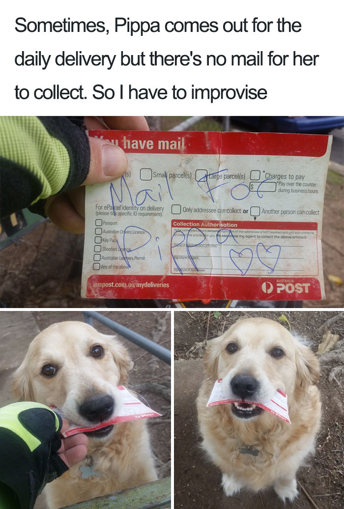 cute-wholesome-dog-puppy-memes-275-590985f418070__700.jpg