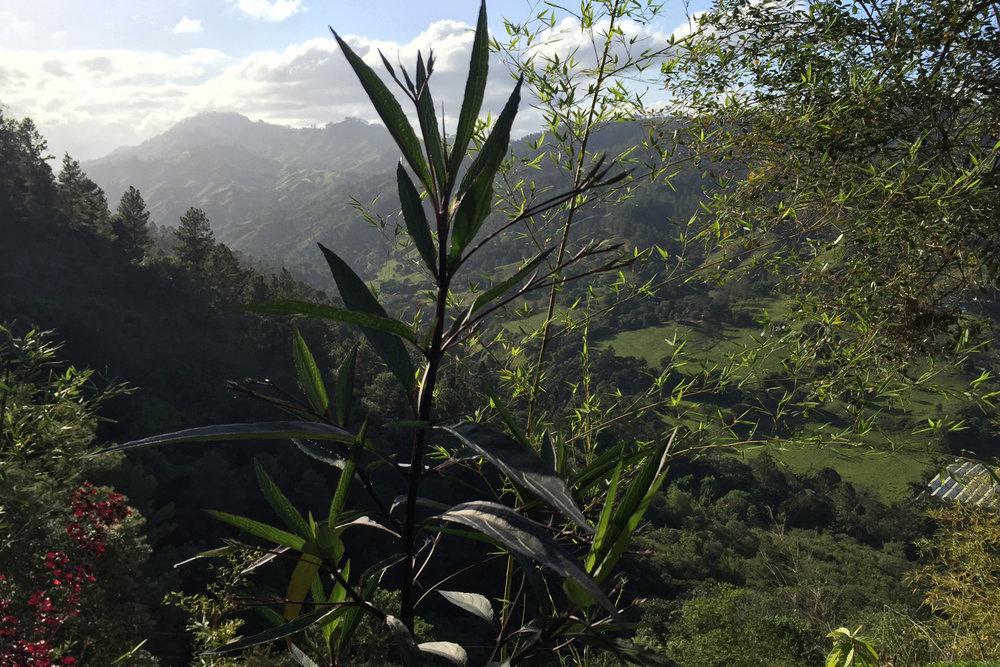 tropics26.jpg