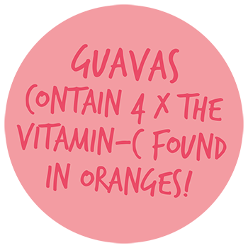 guava_pop3_350.png