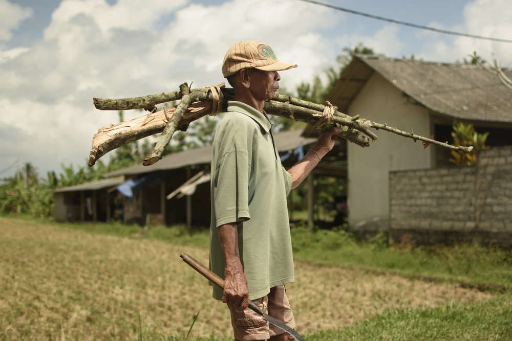 A villager from Jegu Perenel, Tabanan carrying wood across the farm.