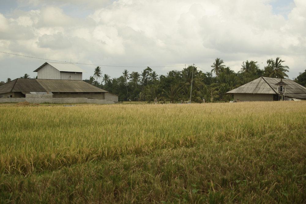 Jegu Penebel, an idyllic farming village located in Tabanan, one of the inland regions of the island Bali.