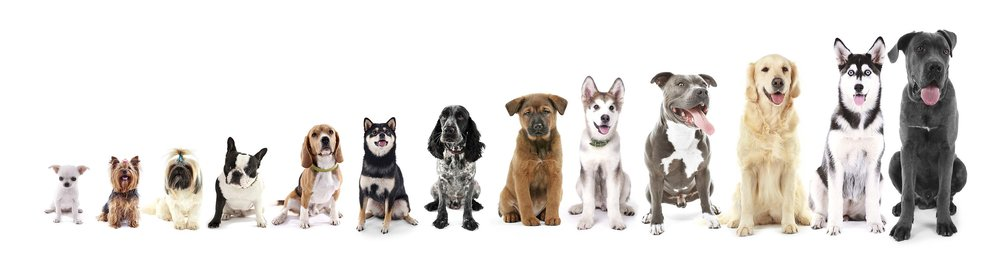 Dogs on raw animal diet