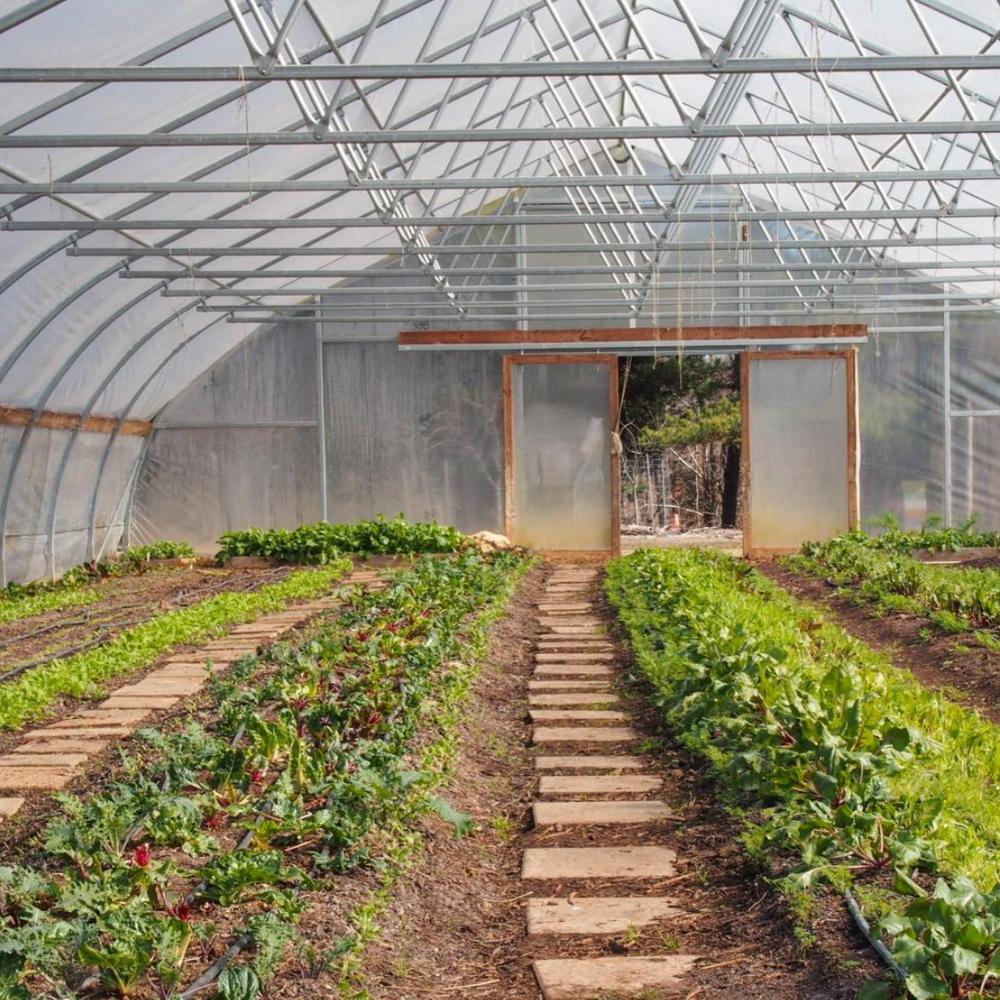 OUR FARMS -