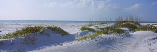 grass-on-the-beach-lido-beach-lido-key-sarasota-florida-usa_a-l-2620622-4990763.jpg