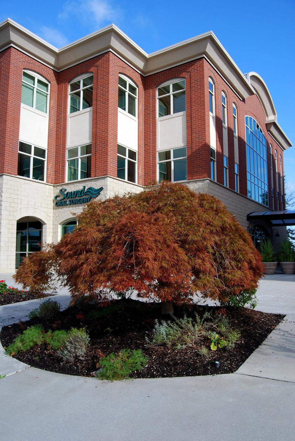 PP - plaza tree.jpg