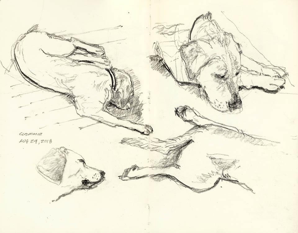 Dog Study, Graphite on Paper