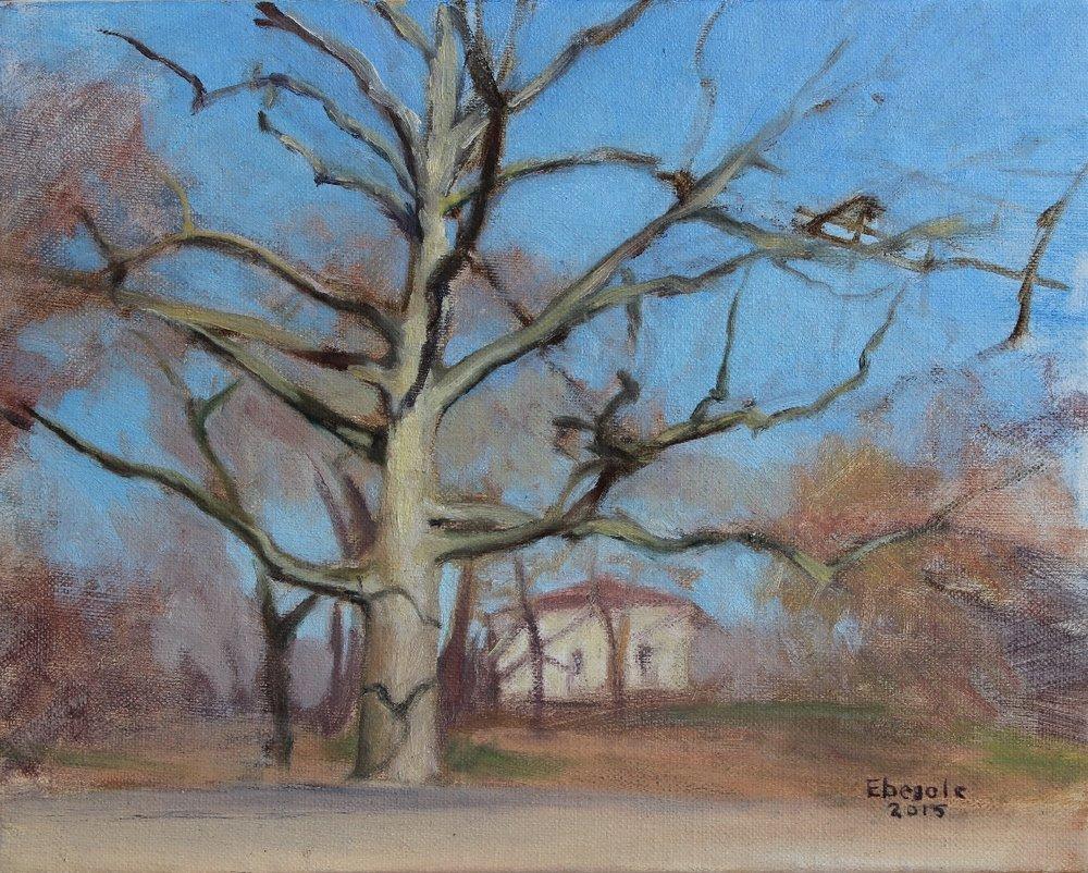 Tree & Tennis House, Prospect Park