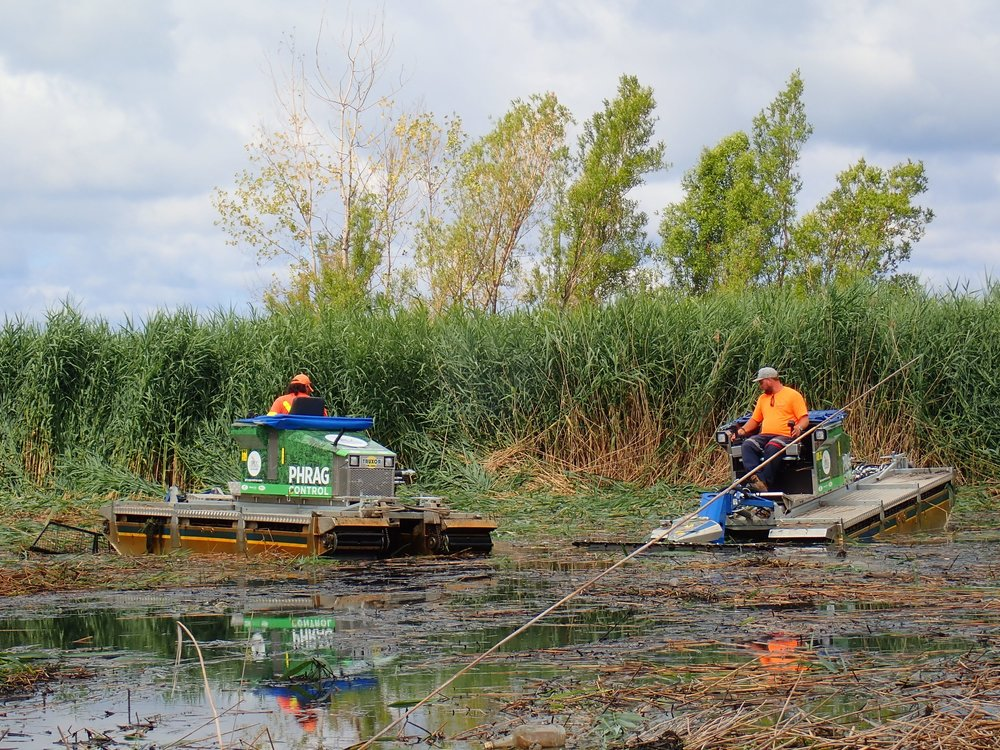 Chad and Bev take time to survey their work after cutting  Phragmites  along the Lake Huron shoreline.