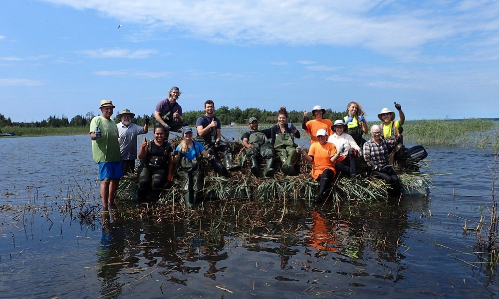 Volunteers pose for a photo on top of a  Phragmites  collection barge.
