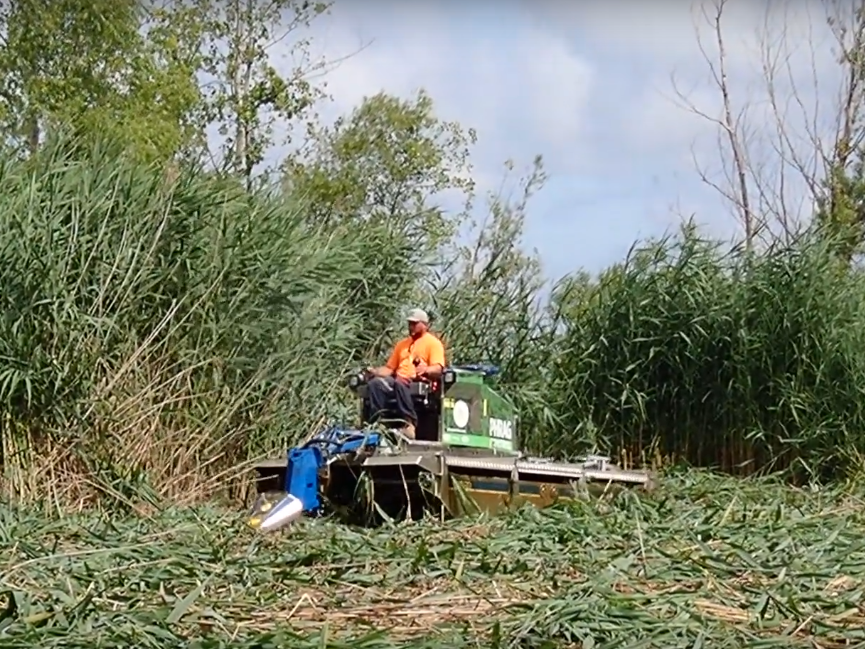 Cutting  Phragmites  with a Truxor #1.