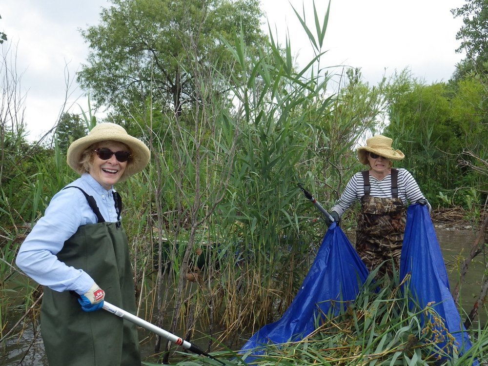 Lambton Shores Phragmites Community Group volunteers gather  Phragmites.