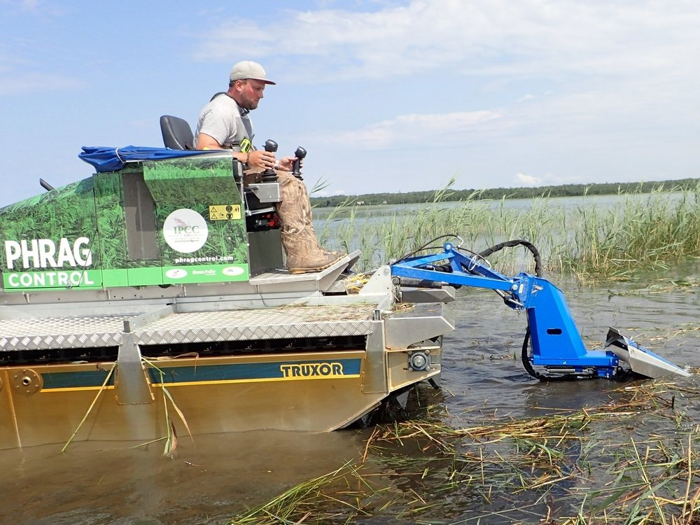 Chad cuts  Phragmites  with a Truxor.