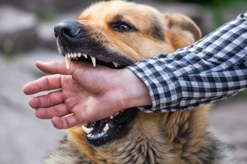 dog biting a man in san diego