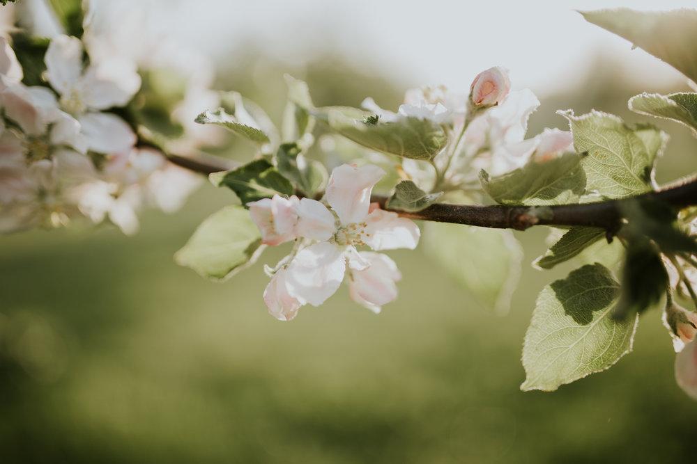 jaxin-cherryblossoms-vancouverwa-jamiecarle-8334.jpg