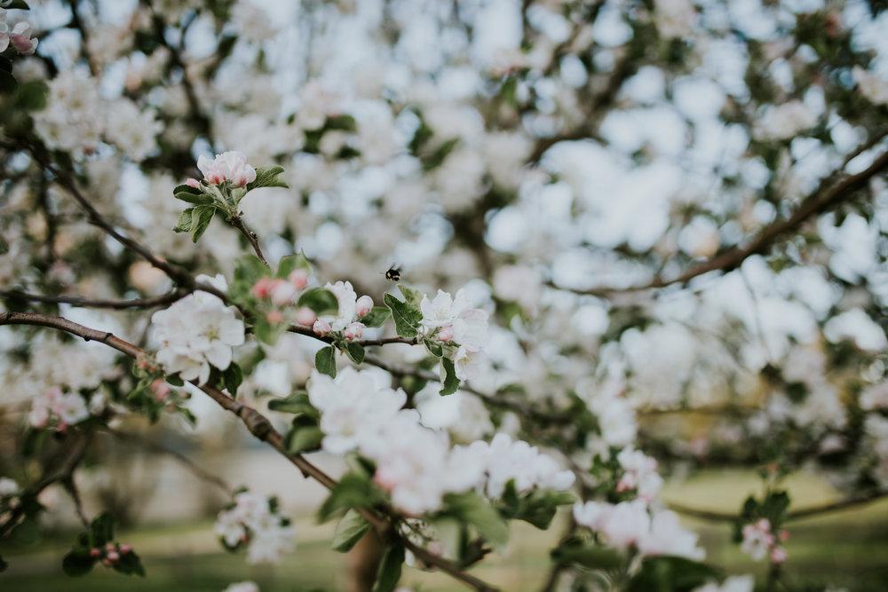 jaxin-cherryblossoms-vancouverwa-jamiecarle-8346.jpg