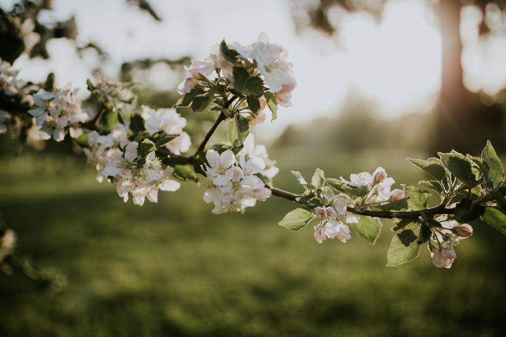 jaxin-cherryblossoms-vancouverwa-jamiecarle-8333.jpg