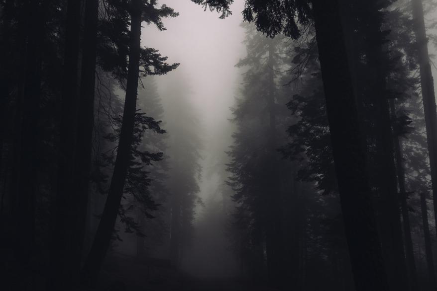 trees-2616706_1920.jpg