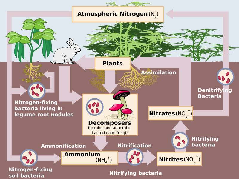 The nitrogen cycle.  Source