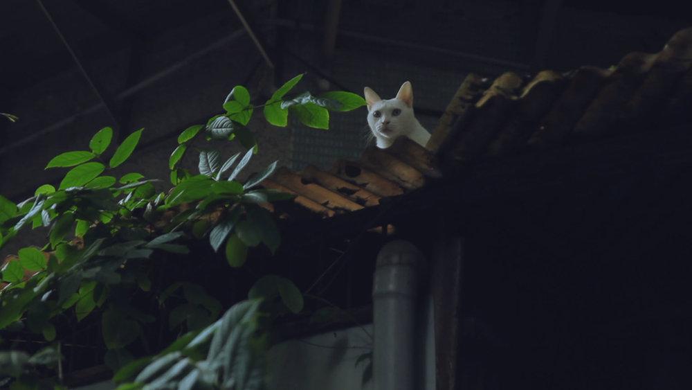 SPCA - Stray Cat