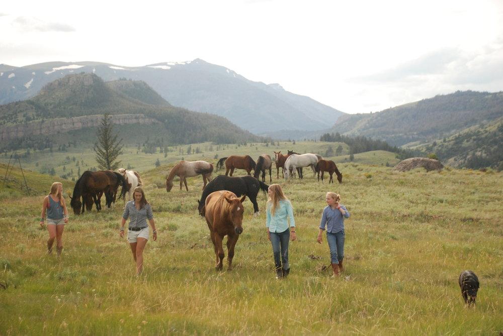 4girls&horses.JPG