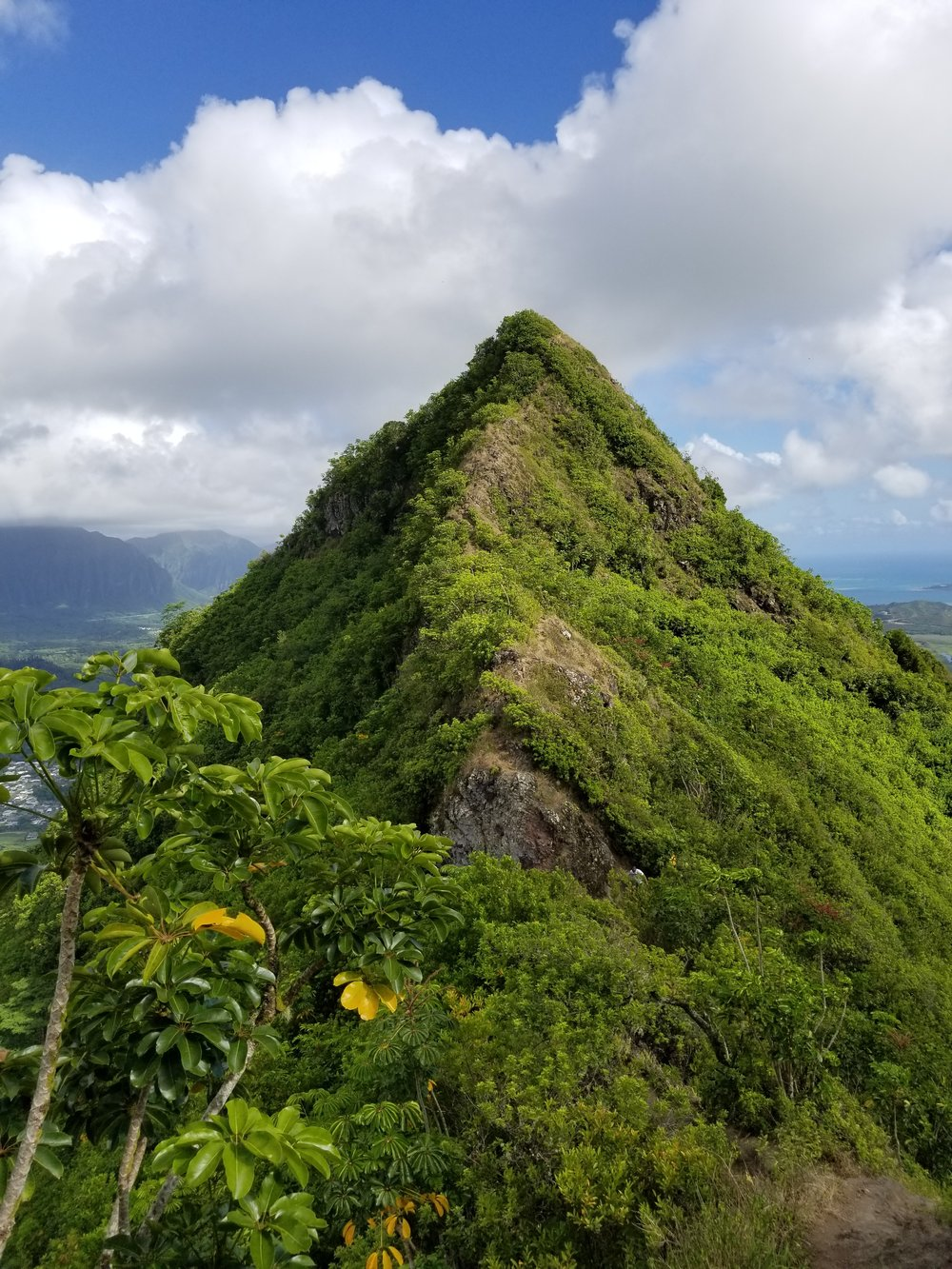 best-hikes-in-oahu-olomano-ridge-trail-polywander