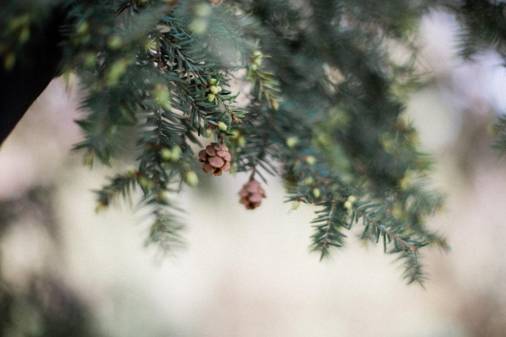 dorothy-louise-photography-Missouri-botanical-garden-maternity-8177.jpg