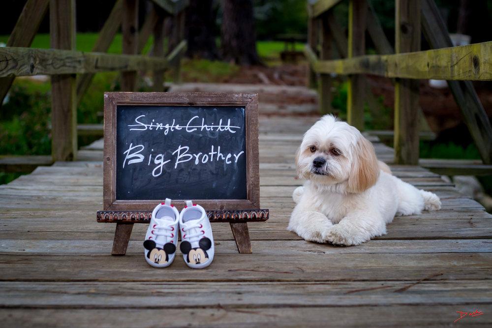 Maternity Announcement Photographer in Memphis Collierville TN.jpg