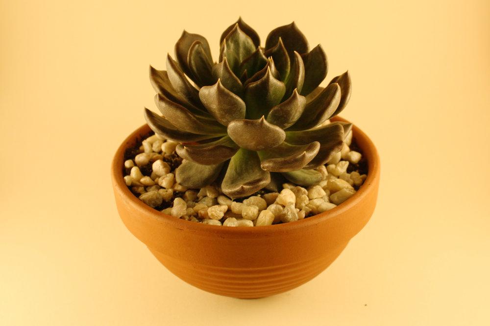 Plant_Lightbox1.jpg